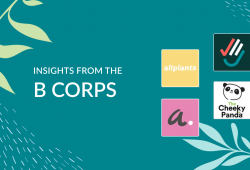 Insights from the B Corps